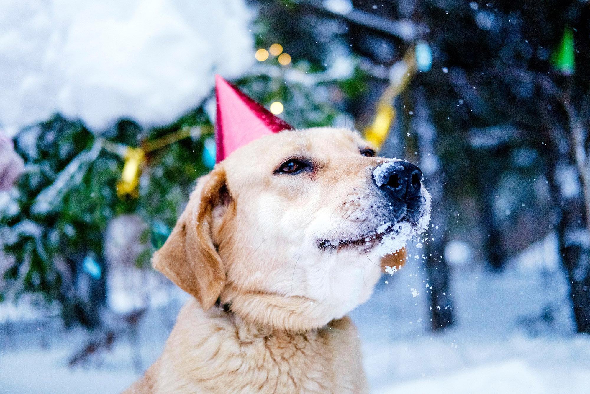 В Харькове беспородные псы устроят новогодний маскарад