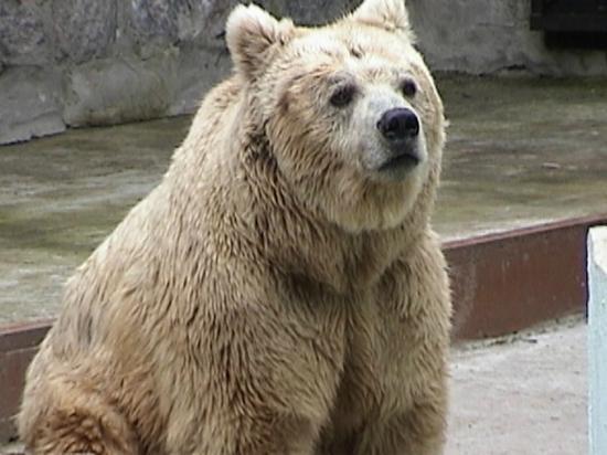 В Харькове животные начали странно себя вести из-за погоды