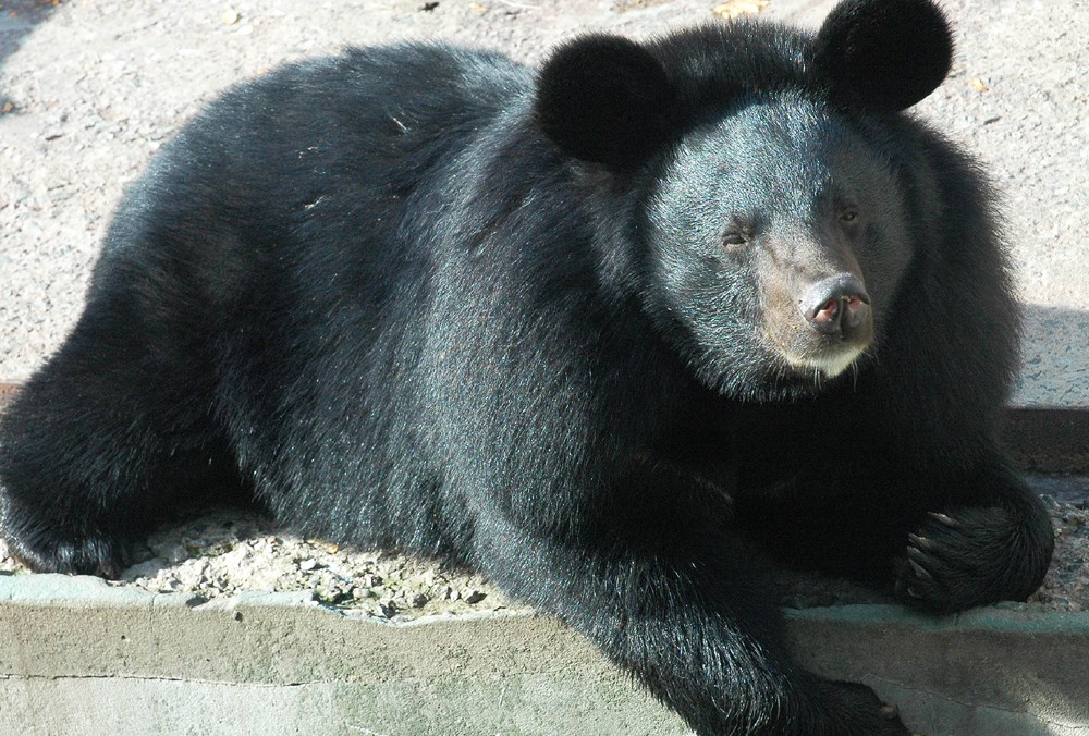 Медведи проснулись в Харьковском зоопарке (видео)
