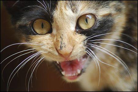В Харькове животное набросилось на женщину