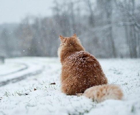 Какая погода будет в Харькове 13 марта