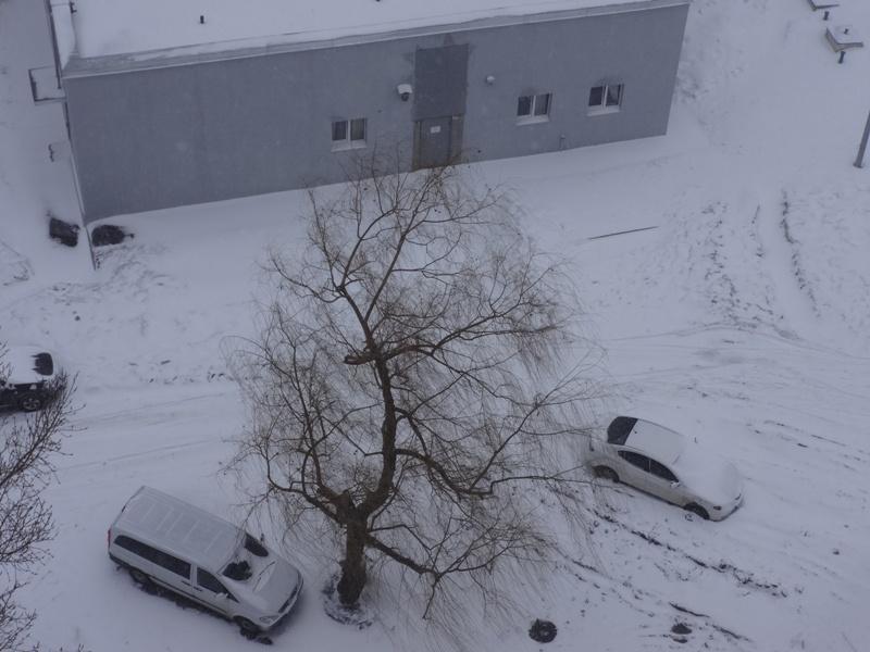 Снежный понедельник добавил новых хлопот жителям Харькова (фото, видео)