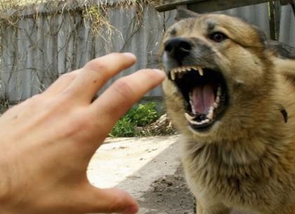 Жителей Харькова атакуют паразиты и бешеные животные