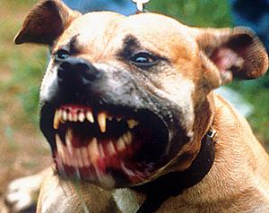«Я не вижу в этом своей вины»: владелец животных, искусавших человека, сделал заявление