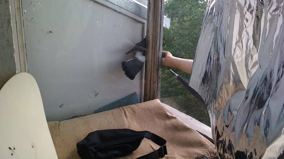 В Харькове спасли неожиданного пленника, застрявшего на балконе многоэтажки (фото)