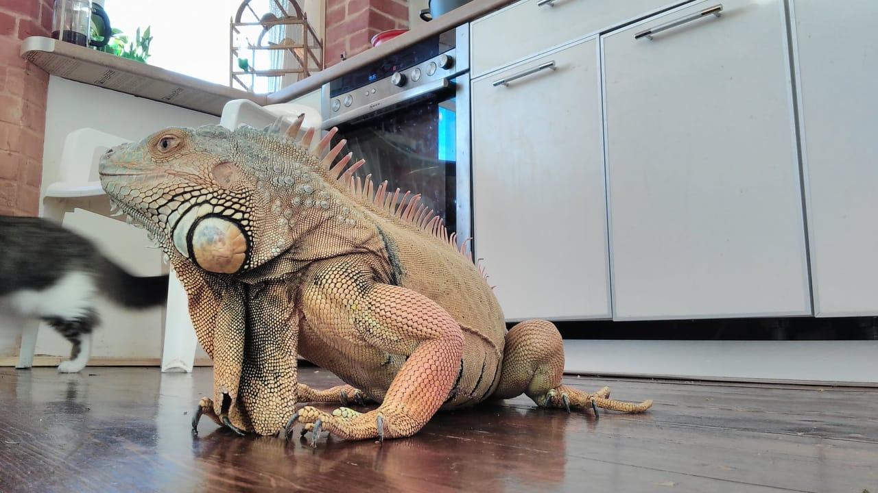 Огромную рептилию, которая потерялась в центре города, ловили на глазах у изумленных харьковчан (фото)