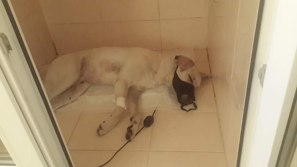История белой собаки из Харькова растрогала тысячи людей