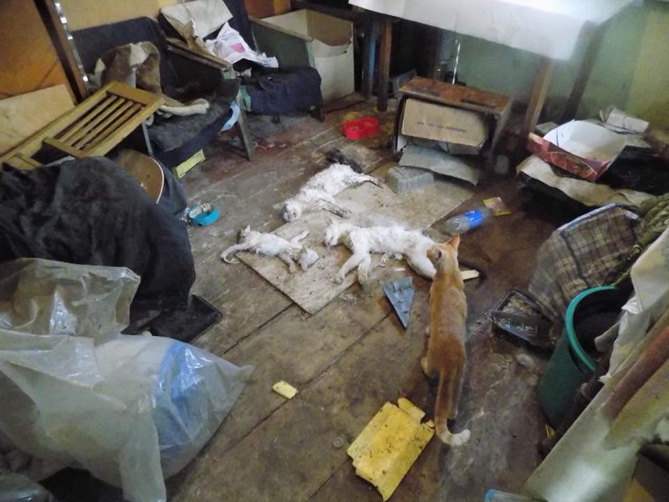 ЧП в Харькове. В частном доме нашли несколько трупов (фото)
