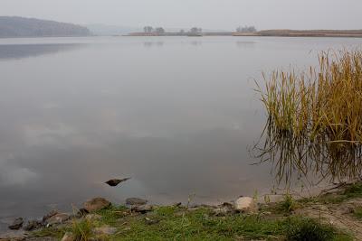 Экологический катаклизм произошел на Харьковщине (видео)