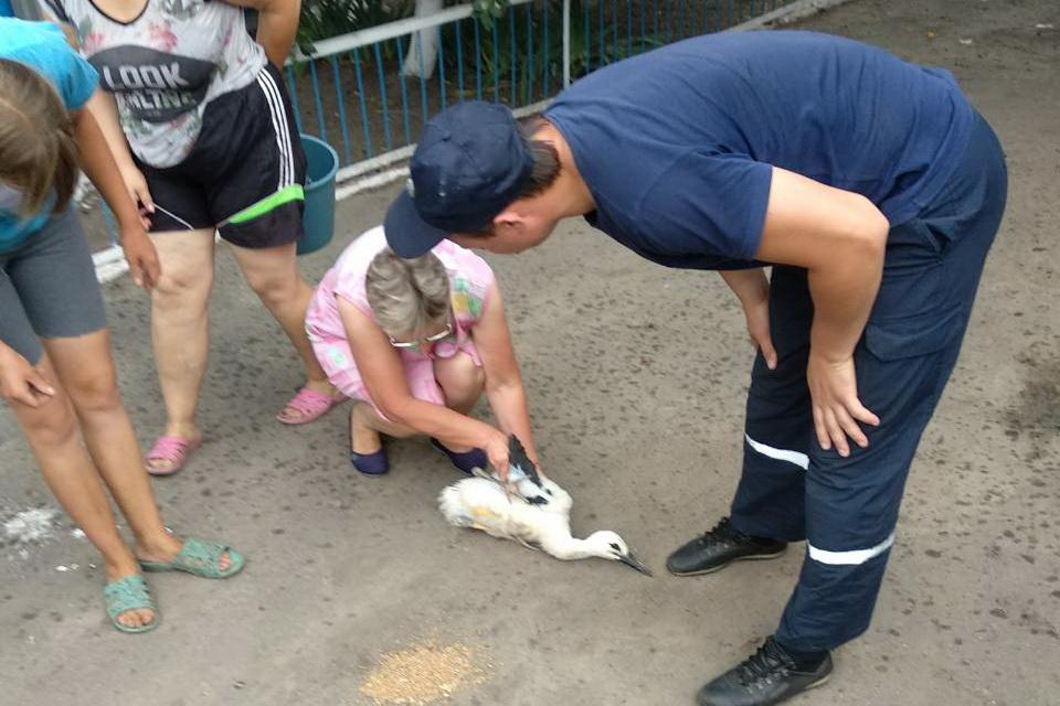 Жители села на Харьковщине переколотились из-за малыша, попавшего в беду (фото)