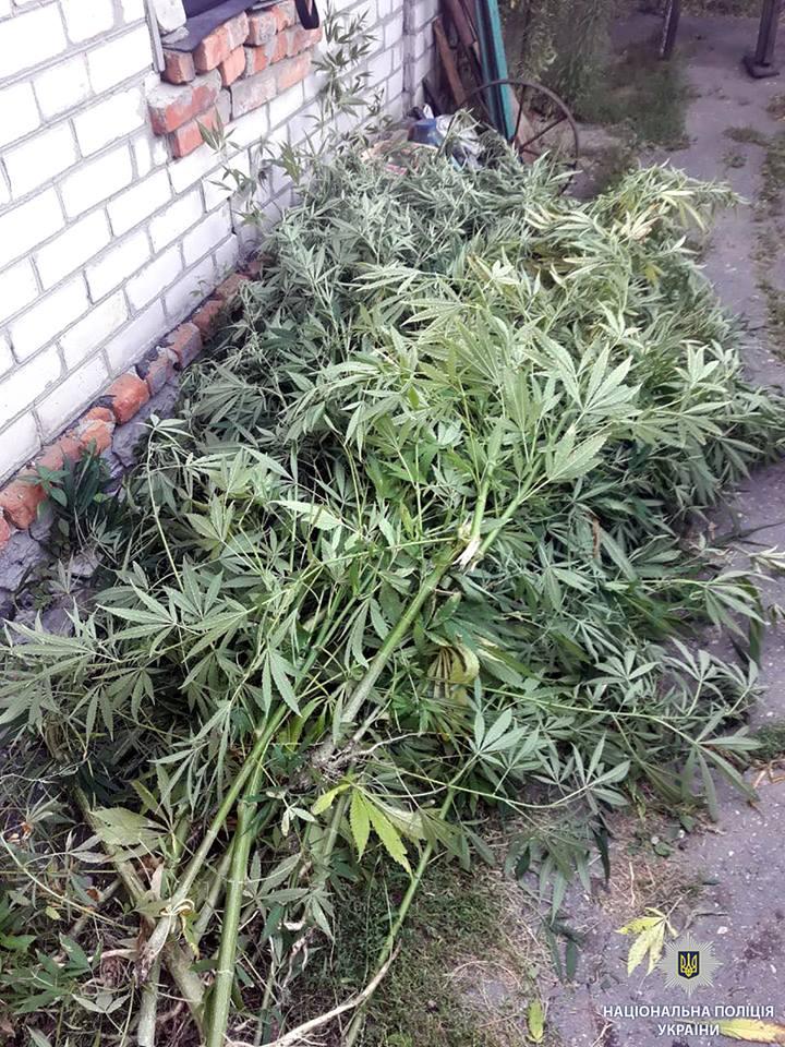 В Харькове беззаботного огородника могут на несколько лет выселить из дома
