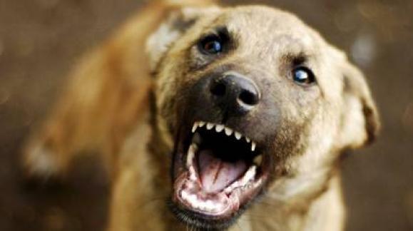Ребенок попал в больницу после катания на животном: инцидент в Харьковской области