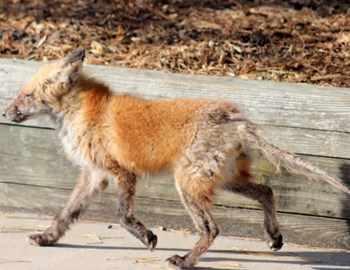 Труп животного, пораженного вирусом, нашли во дворе дома под Харьковом