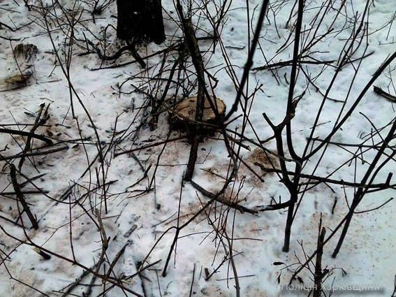 В Харьковской области старушка пыталась добиться справедливости и оказалась в лесу