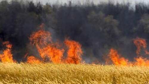 Стихия принесла огромные убытки предпринимателю из Харьковской области (фото)