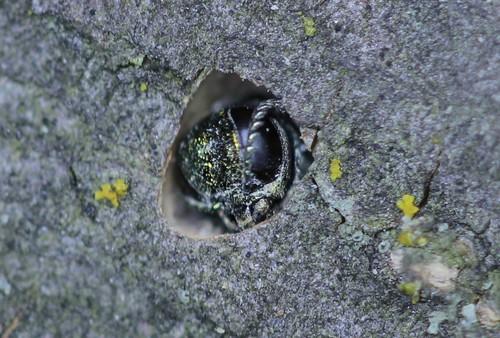 В Харьковской области ожидают появления опасного насекомого (фото, видео)