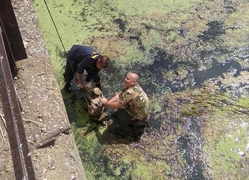 На Харьковщине спасли необычную пострадавшую (фото)