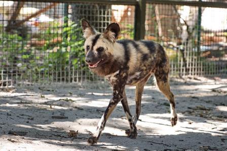 В Харькове появились исчезающие животные