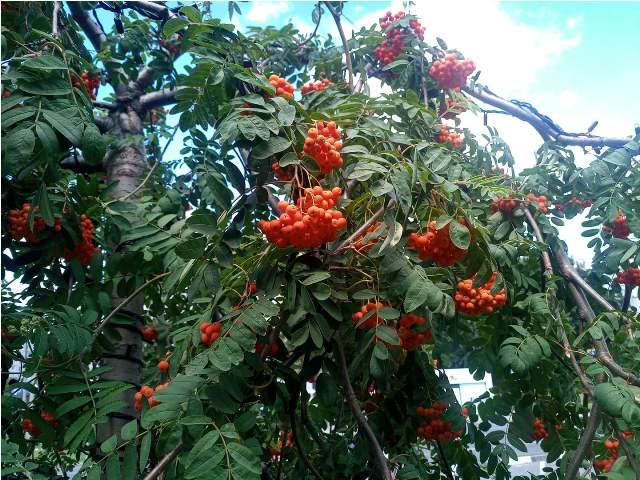 В Харькове можно полюбоваться необычным деревом сезона весна-лето (фото)