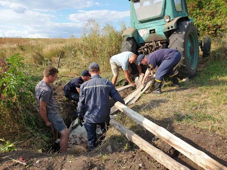 На Харьковщине крупное животное провалилось под землю (фото)
