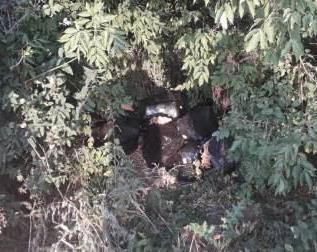 В кустах под Харьковом нашли клад (фото)