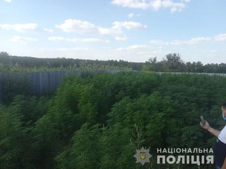 https://gx.net.ua/news_images/1597743214.jpg
