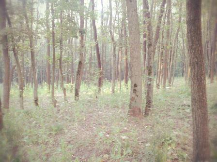 Искали Анну, а нашли Оксану. В харьковском лесу обнаружили тело женщины