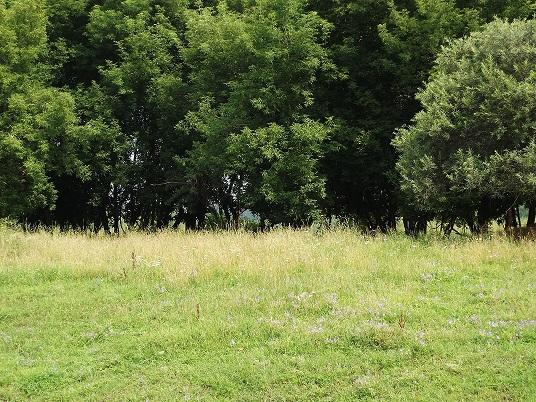 На Харьковщине подросток сбежал от родителей в лес (фото)