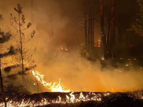 Масштабный пожар на Харьковщине: пострадало несколько человек (фото)