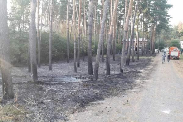 Борьба с огнем продолжается. На Харьковщине вторые сутки спасают от пожара хвойный лес (фото)