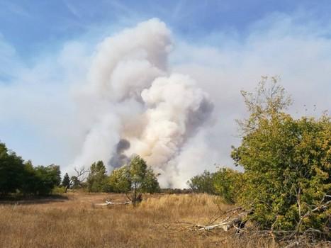 Пожар на Харьковщине: выгорело несколько гектаров леса