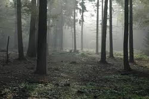 Под Харьковом нашли напуганную женщину, которая три ночи провела в лесу
