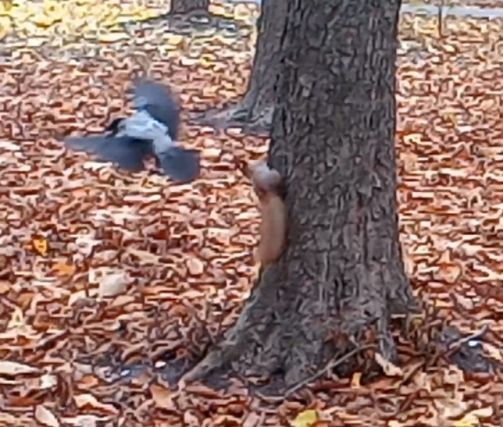 Что происходит в харьковском парке. Рыжая с хвостом навела свои порядки (фото, видео)