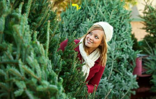 В Харькове можно будет купить самую дешевую новогоднюю елку в Украине (инфографика)