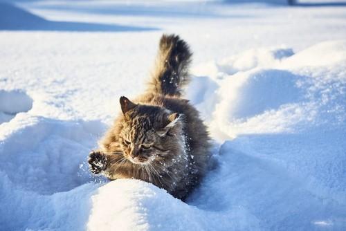 Стало известно, где в Харьковской области выпало больше снега (карта)