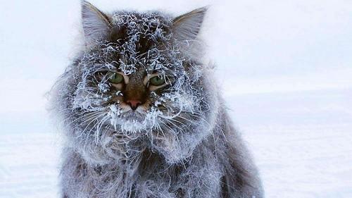 На Харьковщину надвигаются сильные морозы