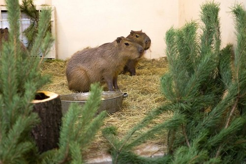Куда харьковчане могут сдать новогоднюю елку