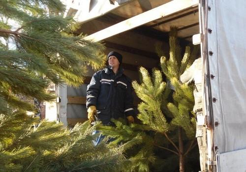 Харьковчан просят приносить елки к торговым центрам