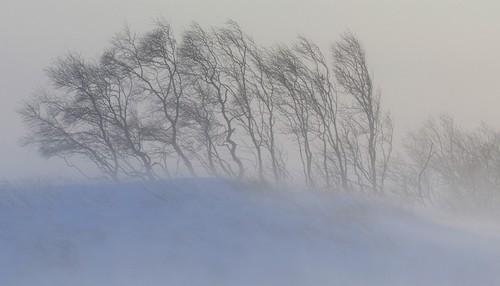 Снегопад надвигается на Харьков: людей предупреждают об опасности