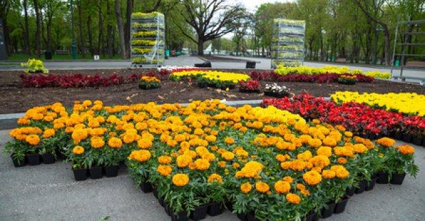 Харьков ожидает масштабное озеленение