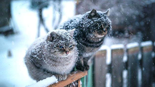 В Харькове ненадолго потеплеет