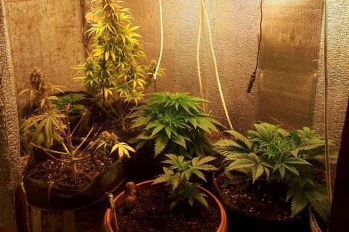 В доме харьковчанина обнаружили опасные для здоровья и жизни растения (фото)