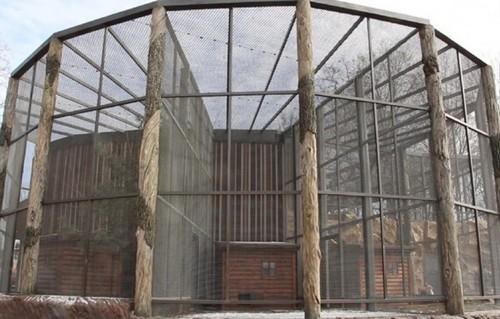 В центре Харькова птицы устроили масштабное переселение (фото, видео)