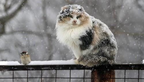 Снегопад и сильный ветер надвигается на Харьков: людей предупреждают об опасности