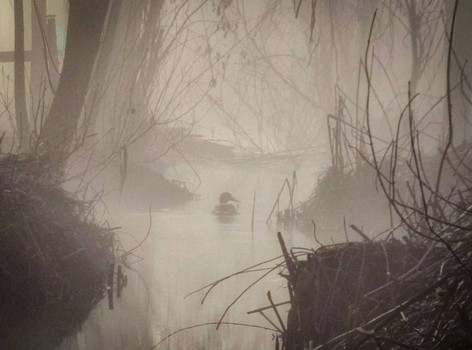 Харьковскую область заволокло густым туманом (фото)