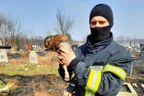 В Харькове спасатели вытащили из огня необычного пострадавшего (фото)