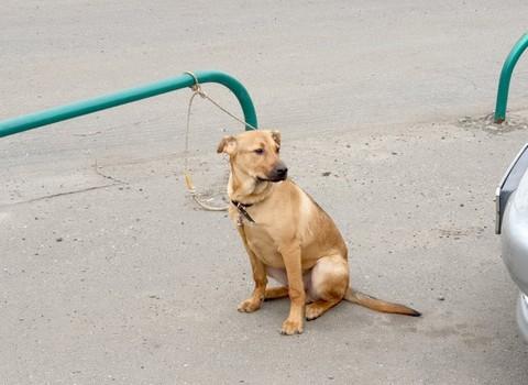 Сначала приютил, а потом бросил. В Харькове нашли собаку, привязанную на парковке (фото)