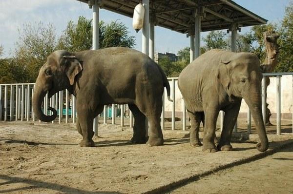 Харьков в XXI веке. 25 апреля – из Нидерландов привезли слона
