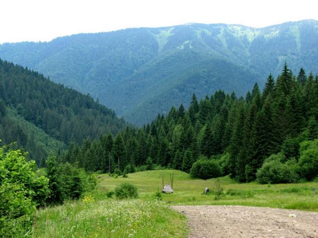 Туристка из Харькова провела ночь в карпатском лесу в ожидании спасения