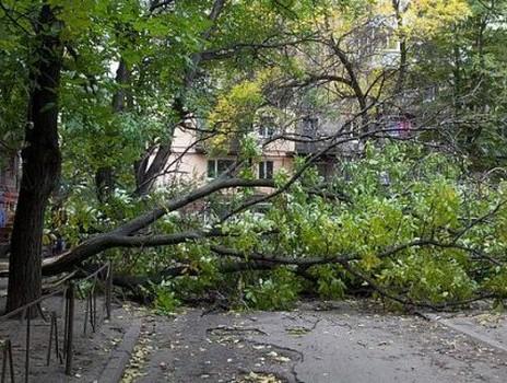 В Харькове дерево упало в Детском парке